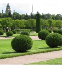 Топіарна стрижка саду