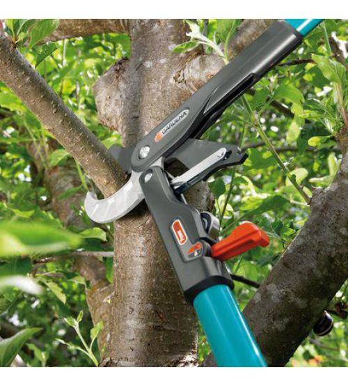 Стрижка плодового дерева