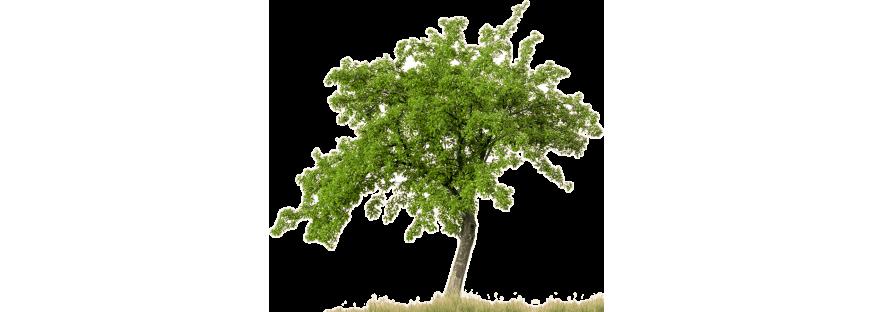 Плодово-ягідні кущі та дерева