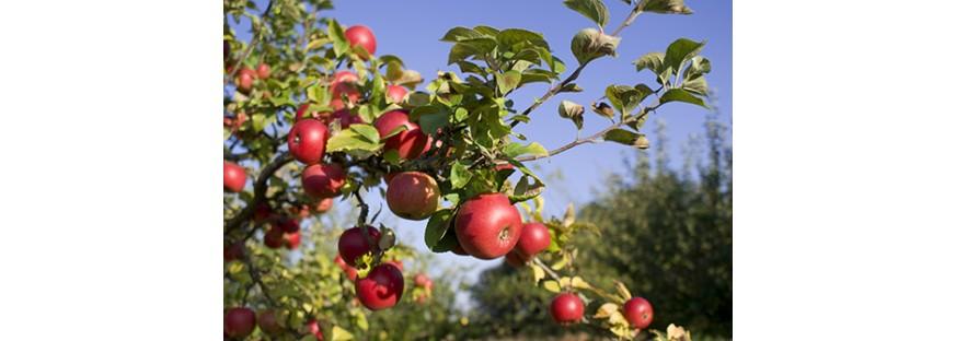 Стрижка плодово-ягідних культур